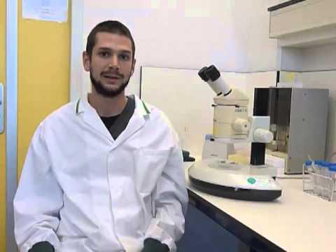 Feedback Control of Gene Expression Variability in the Caenorhabditis elegans Wnt Pathway