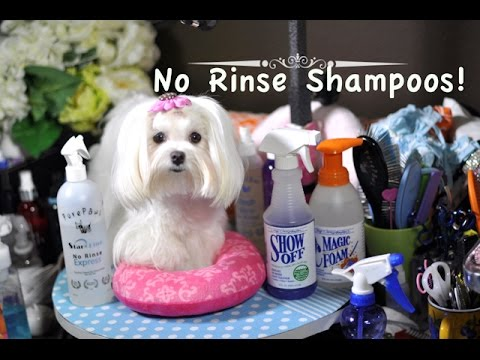 GROOMING Maltese No Rinse Shampoos For Quick Cleaning Pee