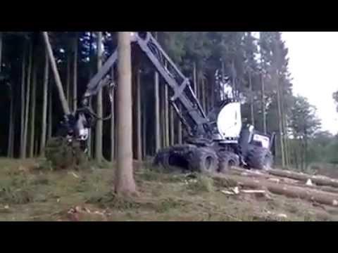 Cách khai thác và vận chuyển gỗ ở Mỹ