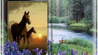 Неожиданная встреча с лошадьми