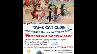 22.04.2017_ Весенняя котовасия-выставка г.Челябинск