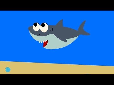 Развивающие и обучающие мультики - Акуленок (Моя Семья) теремок песенки для детей - про животных