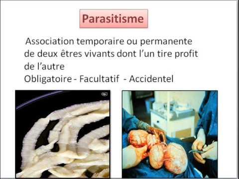 Parasitologe