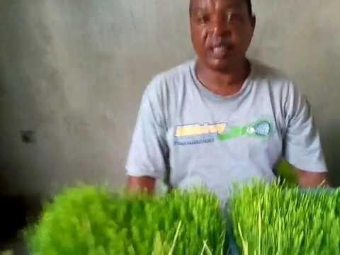 Download HIV (UKIMWI) Rudisha chembe chembe nyeupe.(1)
