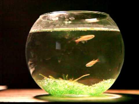 My Fish Pot Youtube
