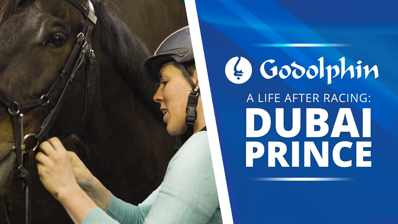 Life after racing: Dubai Prince from racetrack to dressage arena | Part 1 - YouTube