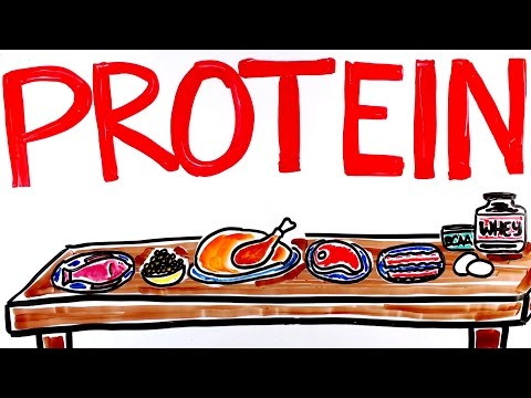 What is Protein? How Much Protein to Build Muscle?