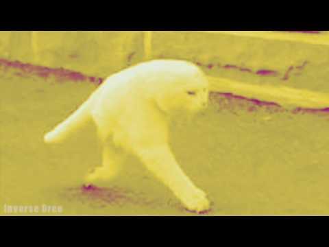 Cursed Cat Images