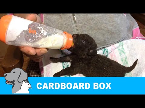Rescued 7 Puppies Abandoned in Cardboard box.