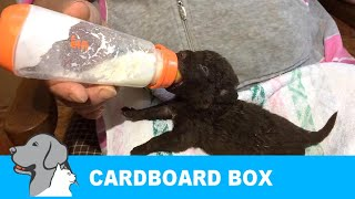 rescued-abandoned-puppies-in-cradboardbox
