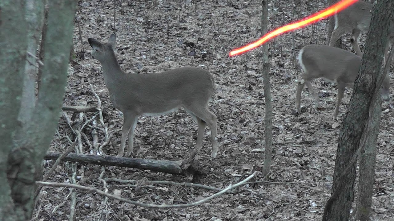 BOWHUNTING: Deer Hunting Heart Shot