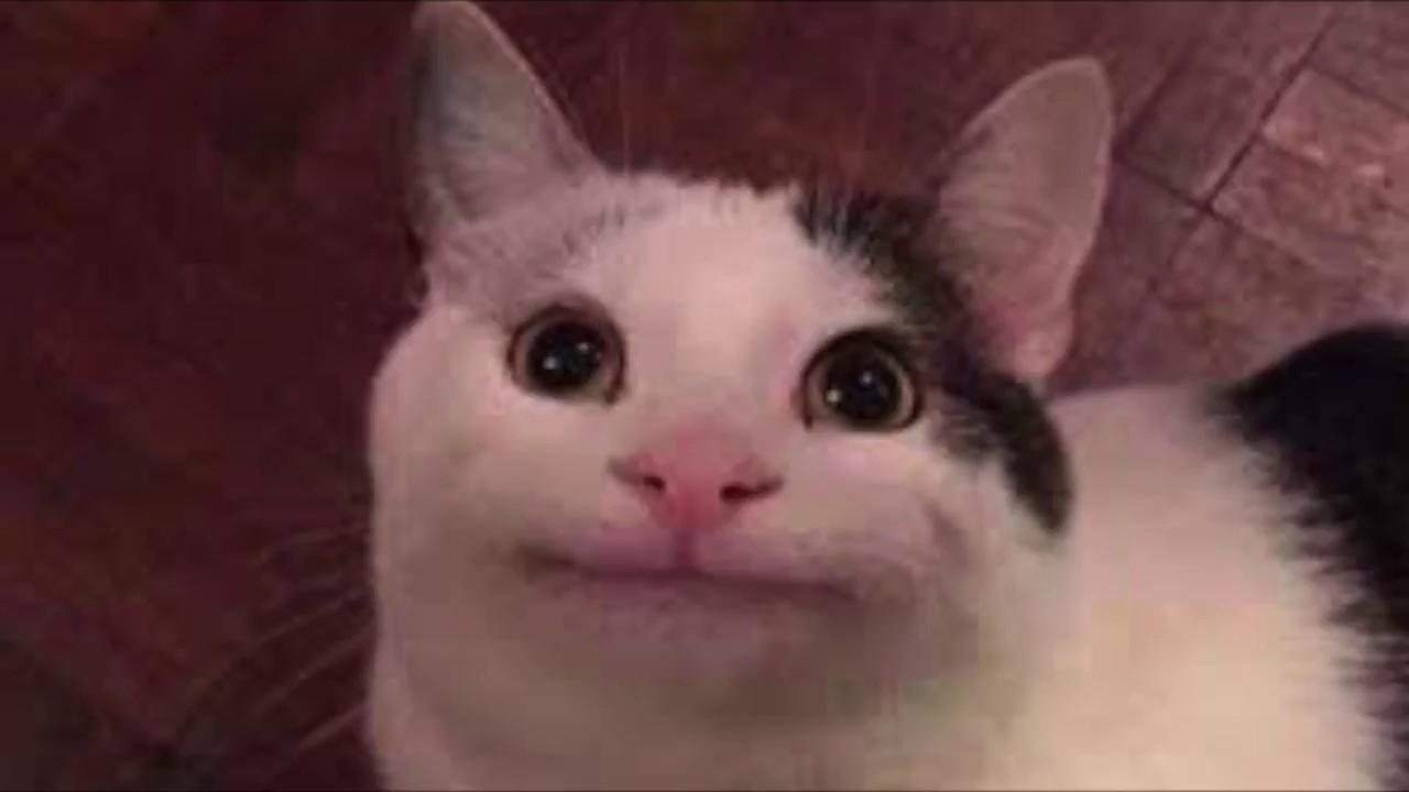 Weird Funny Cats
