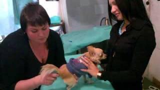 Прививка собаке - часть 1