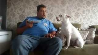 cachorro discute com dono
