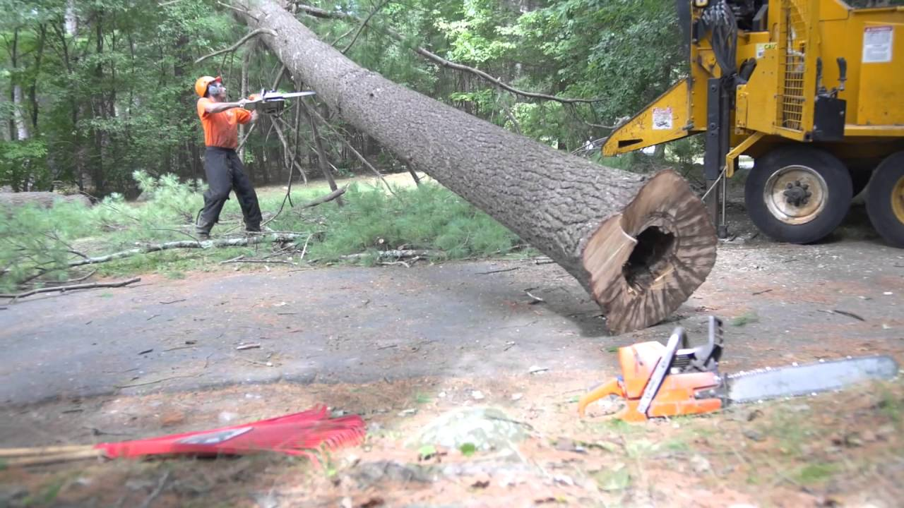 Mayer Tree Service | Your Local Tree Removal Experts (978