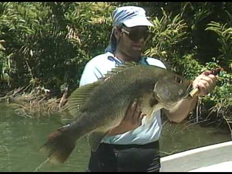Black Bass Fishing New Guinea