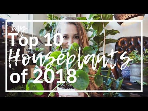 My TOP TEN Houseplants of 2018