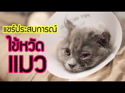 EP7 : แชร์ประสบการณ์ไข้หวัดแมว