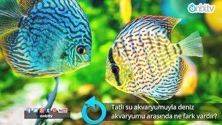 Tatlı su akvaryumuyla deniz akvaryumu arasında ne fark vardır?