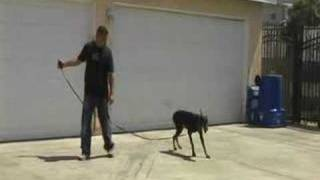 Los Angeles Dog Training | Dog Training (en Español)