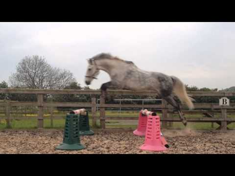 HORSE JUMPING 6FT WIDE