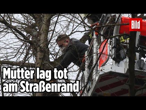 Feuerwehr-Großeinsatz in Hamburg: Tierrettung aus der Baumkrone