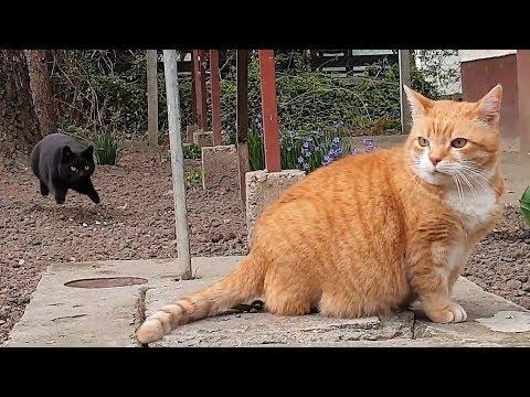 Funny Kitten Annoys Older Cat