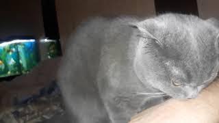 Как понять что надо кастрировать кота?
