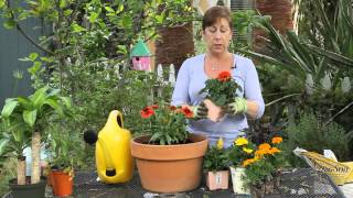 How to Plant Beautiful Containers With Annual Flowers : Garden Space