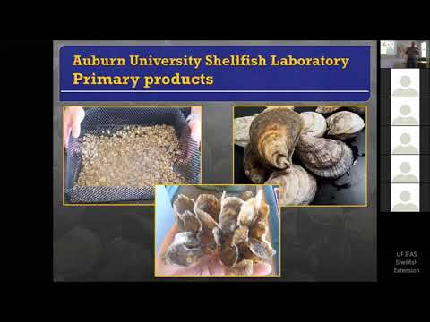 Shellfish Hatchery Experiences With Scott Rickard, Auburn University Shellfish Lab