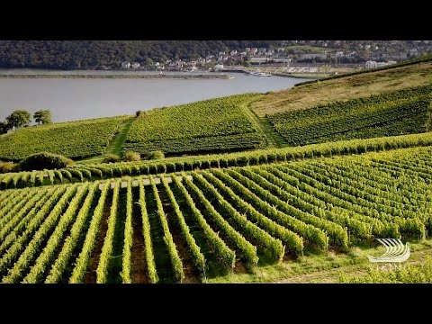 The Wine Regions Of Bordeaux