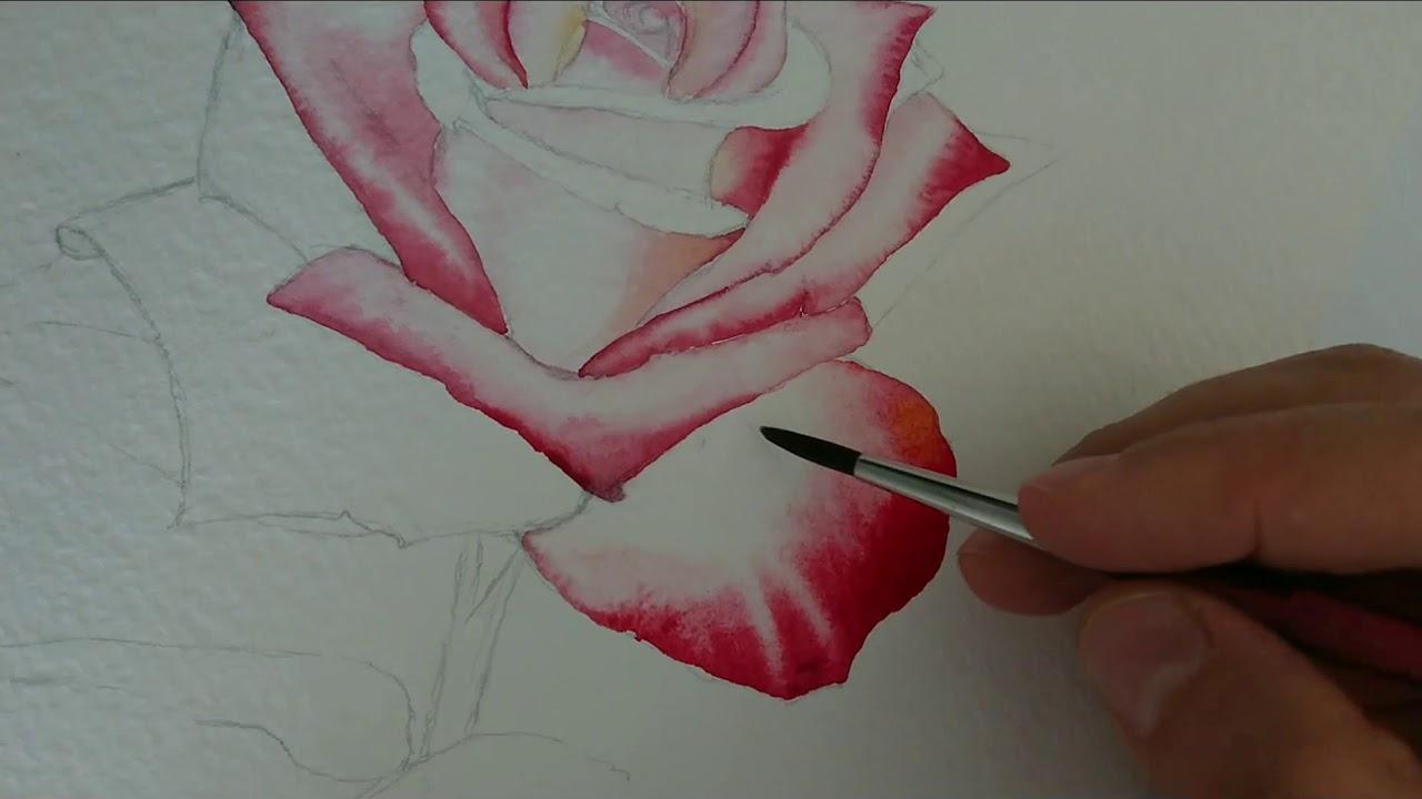Suluboya Gul Cizimi How To Draw Watercolor Rose Youtube
