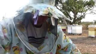 Инновационная рамка плюсы и минусы. Рамка для пчел. Пчеловодство