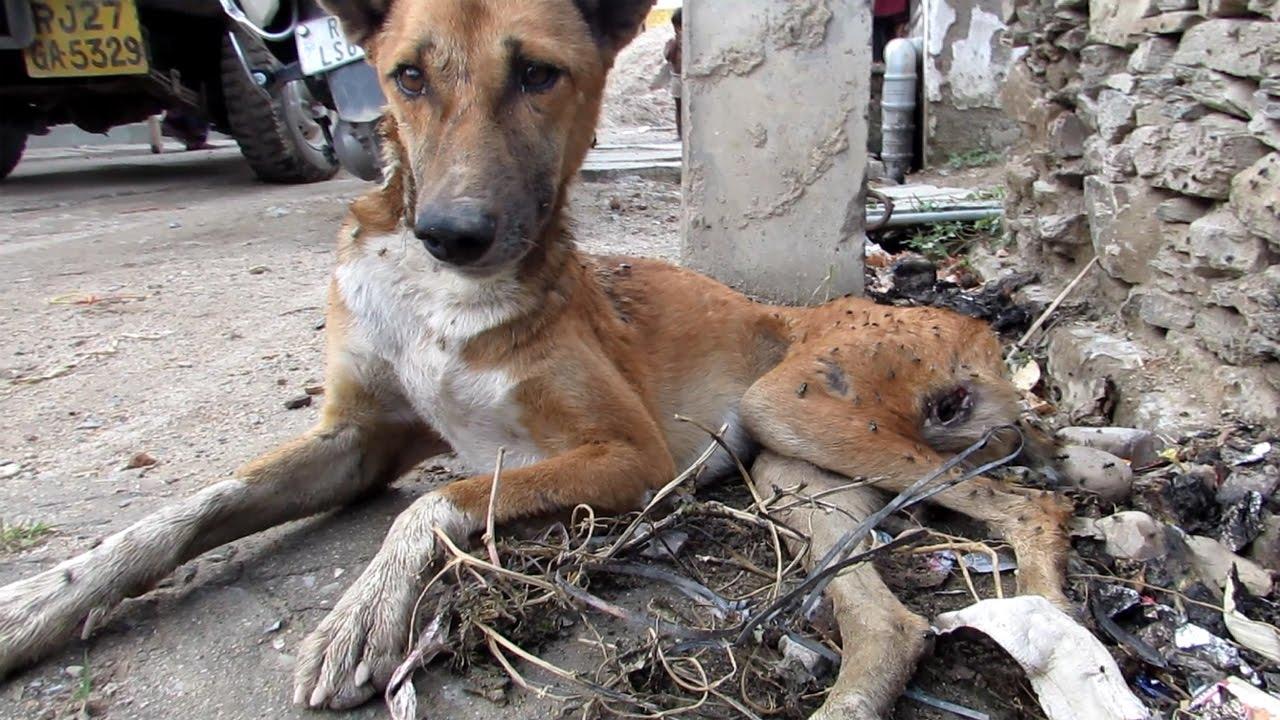 rescue dog amazing story paralysed