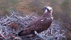 #3 Satakunnan sääkset (Satakunta Osprey #3)