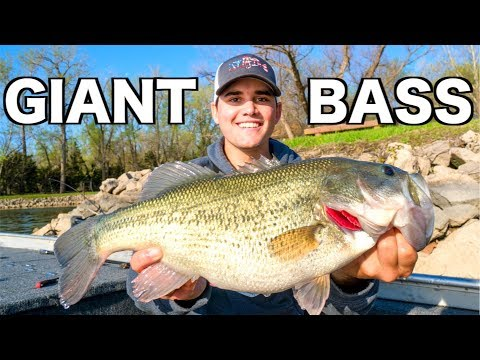 Fishing Crankbaits for GIANT Bass!!!