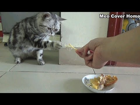 Mother Cat Eating Chicken So Yummy   Funny Cat Vines 2018 [Funny Pets]