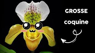 Reproduction des plantes à fleurs Ft le Plantoscope