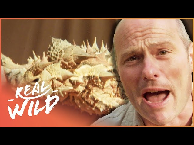 The Hazardous Animals Of Outback Australia!   Bite Me With Dr Mike In Borneo   Real Wild Channel
