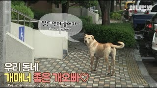 The dog with nice manners walks you home day and night
