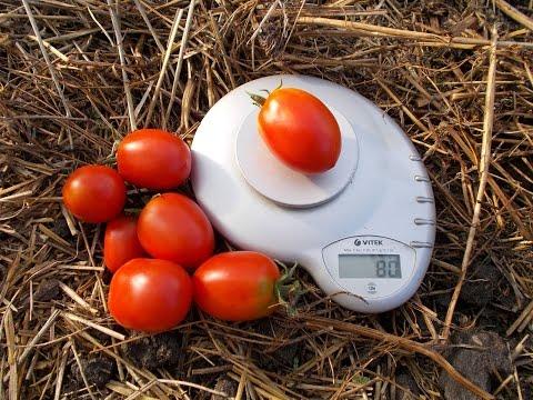 Сорт томата Де-Барао красный
