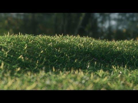 Blender grass tutorial | {Time lapse} grass field