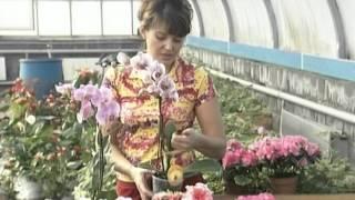 Орхидеи просты в уходе. Урожайные грядки.(, 2016-03-03T08:31:37.000Z)
