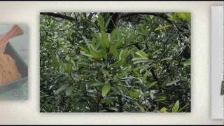 Best Types Of Cinnamon - Cinnamon Uses - Cassia, Ceylon, Zeylanicum, True