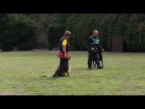 Dog Sport Victoria - Robyn English with Ondra & Kris Kotsopoulos with Levi