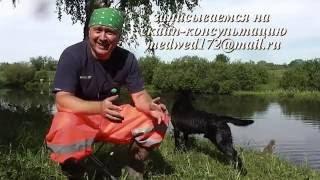 как вымыть собаку в водоеме