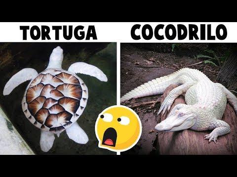 10 Animales MAS BLANCOS que la LECHE 🥛 (con DeToxoMoroxo)