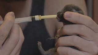Вскармливание котенка с 1 по 9 день жизни