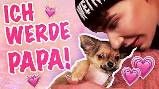 NEUES FAMILIENMITGLIED! ♡ Mein CHIHUAHUA WELPE! | Marvyn Macnificent