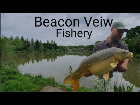 Beacon Veiw Fishery!! May 2019 ,Stalking The Margins!! #chasing Carp